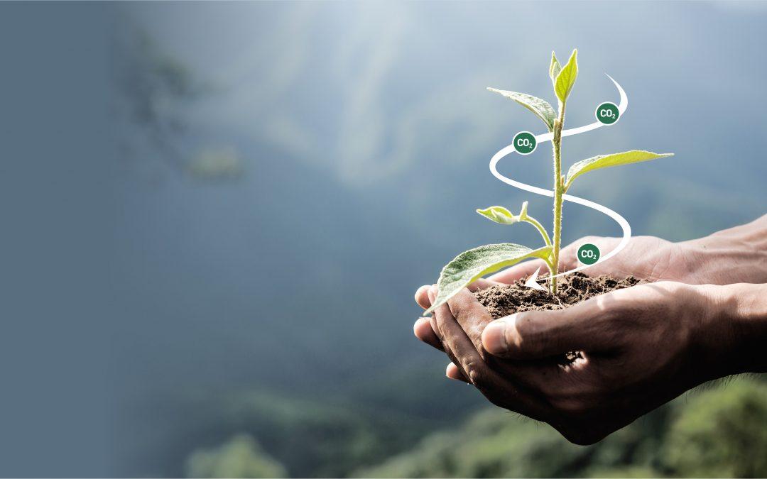 People prefer 'natural' strategies to reduce atmospheric carbon