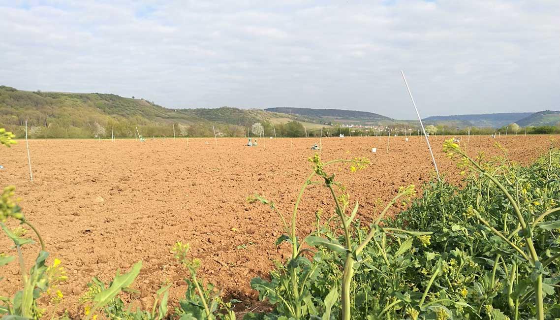 PFLANZENKOHLE-EU-weit-fuer-oeko-Landbau-zugelassen