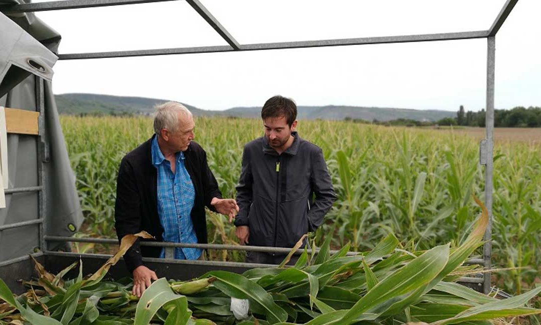 VIDEO: SWR begleitet die Mais-Ernte des Carbon-Dünger-Projektes
